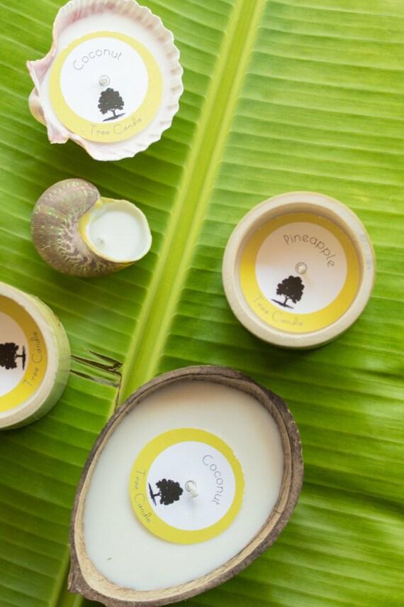 Soy Candles: 2 Bamboos + 1 Coconut + 2 Seashells