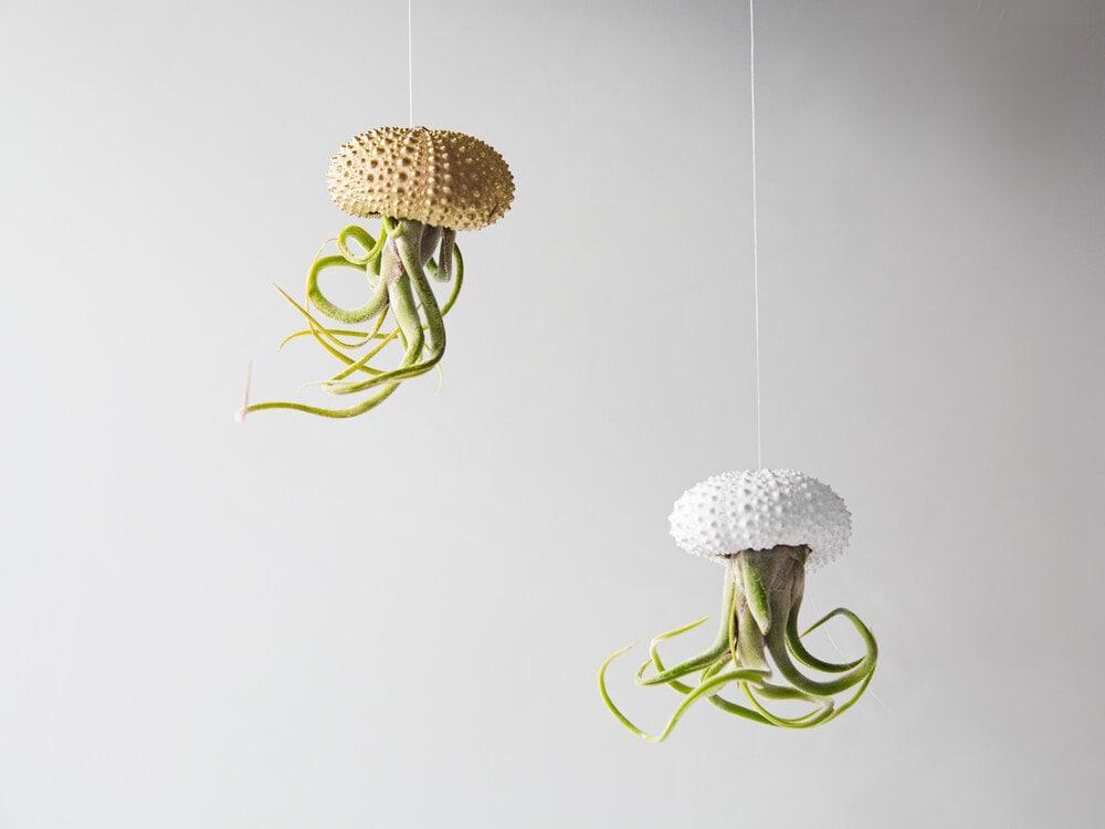 Air Plant Jellyfish Planters White And Gold Decor Hanging ~ Spülbecken Wasserhahn Loch Bohren