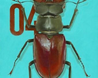 04 Stag Beetle