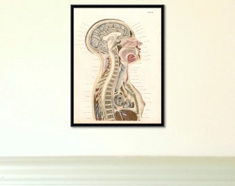 Anatomical Study of Woman antique reproduction print giclee print anatomy print anatomy art vintage anatomy antique anatomy