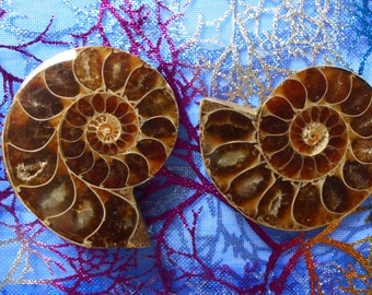 2 polished AMMONITE halves from Madagascar - for jewelry-making, collecting fossils - #403-4