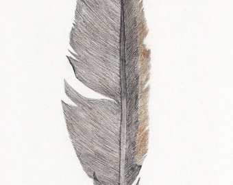 Feather original drawing ~ brown and black feather pencil art