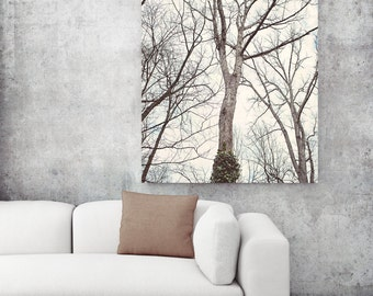 canvas art trees, tree canvas print, nature canvas art, tree photo, gallery canvas, large wall art, bedroom art trees, abstract nature print