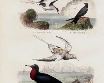 1848 Antique print of asea birds, aquatic bird, marine birds, gull, coastal,  lighthouse, hand colored victorian engraving. Original antique