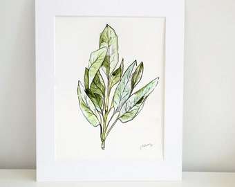 Sage Watercolor Print