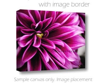 Fuchsia & Black Wall Art-Dramatic Wall Art-Dahlia on Canvas-Square Canvas Wrap-Floral Wall Decor-Modern Wall Art-Floral Art-Statement Art