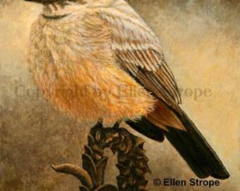 CARD, Say's Phoebe, bird decor, note cards, Ellen Strope, castteam, home decor,bird cards, wildlife, birds, bird art
