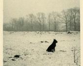 "Vintage Photo ""The Snow Dog"" Snapshot Photo Old Antique Photo Black & White Photograph Found Paper Ephemera Vernacular - 152"