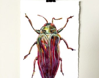 Jewel Beetle.  A signed original colorful bug painting.