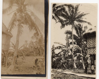 Up A Tree After Green Coconuts 2 Vintage Photos Antique Photographs Paper Ephemera