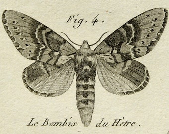 1789 Antique print of NIGHTS BUTTERFLIES, different species. MOTHS. Insects. Entomology. Panckoucke Encyclopédie Engraving. 227 years old