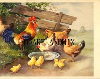 Vintage Chicken family illustration, rooster, hens, chicks, Easter download printable art image