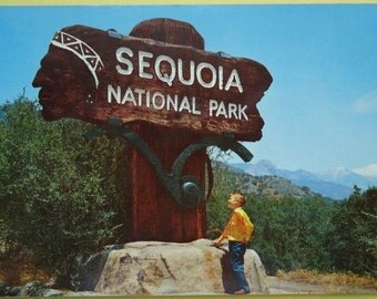 Postcard Sequoia National Park 1965