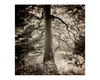 Tree Photography, Forest Photography Print, Nature Wall Art, Square Photograph, Rustic Photography Art Print Deep Beauty