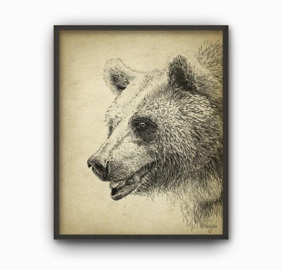 Grizzly Bear lmina oso Grizzly lpiz dibujo grabado