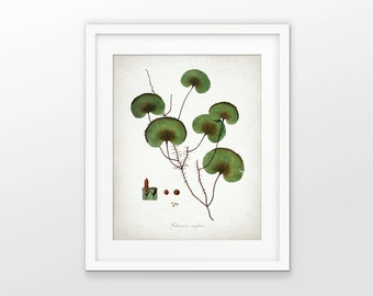 Green Plant Art Print - Green Wall Decor - Plant Art - Botanical Print - Green Leaf - Green Leaves - Single Print #1613 - INSTANT DOWNLOAD