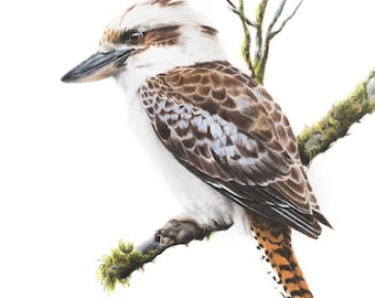 Bird Art Print- Laughing Kookaburra Art Print 5x7 - Kookaburra Art Print - Australian Bird Art Print - Australian Wildlife Art Print