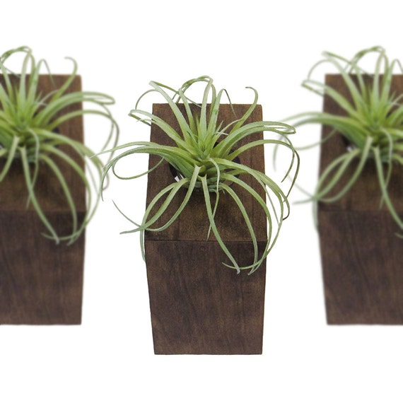 Air plant wall holder air plant wall vase hanging holder planter by 12 elegant ways to bring - Elegant ways to display air plants in your home ...