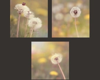 Dandelions Wall Art, Nature Tripdych Wrapped Canvas Photo Print, Seeded Dandelion Flowers in a Field