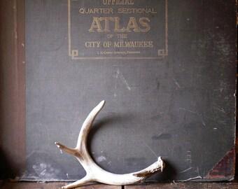 Vintage Single Deer Antler - Natural Decor