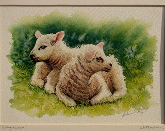 In Sale/ Offers! Half Price. Original Lambs Watercolour. Sheep, Lambs, Farm animals. Farm Originals. Watercolours by Andrew Bailey.
