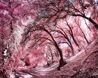 Pink Oak Forest, Infrared Fine Art Photography, Metallic Paper  / Metal Print