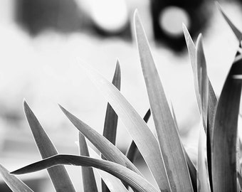 "Large Black and White Wall Art, Black and White Nature Photography, Botanical Print, B&W Art, Plant Leaves, Gray Wall Decor - ""Gentle"""