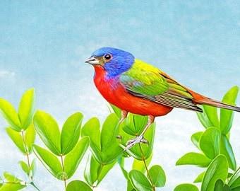 Painted Bunting, Bird on Branch, Bird Photography, Bird Wall Art, Bunting Closeup, Fine Art Photography, Bird Art Decor, Songbird Art Print