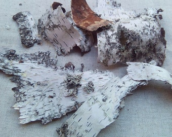 Birch bark for craft, natural birch bark set