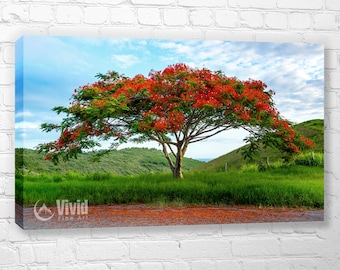 Canvas art print, Flamboyant Tree, Landscape Photography, Tree Photography, Tropical Print, flamboyan, Tree Wall Decor, Photography canvas