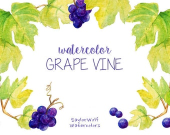 Watercolor Grape Vine Clipart, Instant Digital Download, Hand Painted Vineyard Graphics, Purple Grapes and Green Leaves Illustration