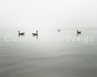 Foggy Scene, Geese, Instant Download, 12x12, Fine Art Digital Photo, Digital Printable, Photography