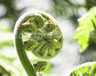 Wall Art Digital Download New Zealand Fern Fine Art Landscape Photography - Instant Digital Download Printable Travel Photography