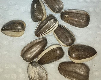 Sunflower seeds 10+. Free Shipping!