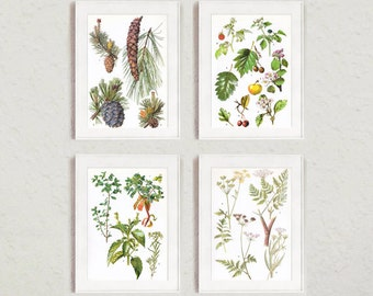 Flower Print Set - Set of 4 Alpine Plant Prints from the 1970s