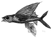 Popular items for flying fish drawing on etsy for Flying fish drawing