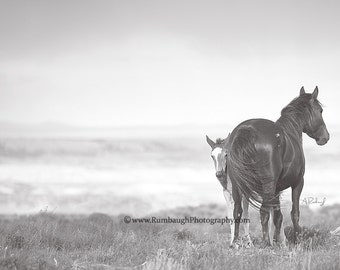 Peek-A-Boo- Wild mare gazes off as young filly is shy but curious-Wild horse print