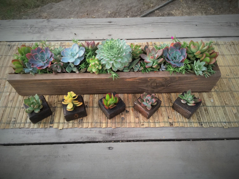 Succulent arrangement in long rustic wood planter by