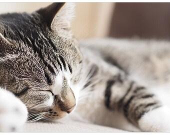 CAT Pets Kitten sleeping Poster Print P2633