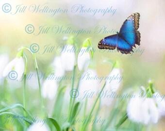 DIGITAL Fine Art Photography, photo, jpg file, instant download, Blue Butterfly