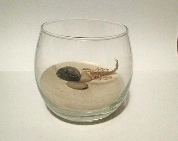 My Pet (Dead) Scorpion - Build Your Own Terrarium Kit One Of A Kind Morbid Gift