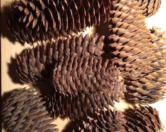Spruce Cones, Large Pine  Cones, Bulk Spruce Cones, Natural Decoration