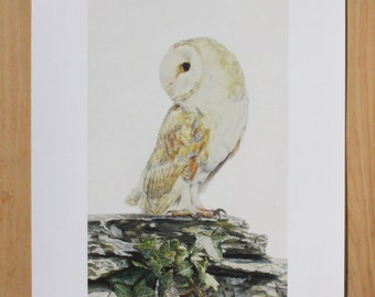 Barn Owl on Wall Art Print