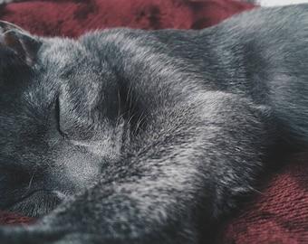 Sleeping Oliver #2