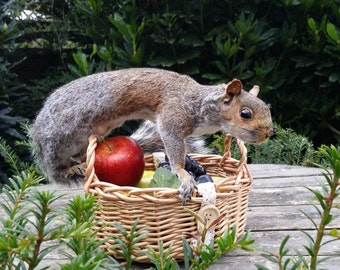 Lovely Cheeky Taxidermy Squirrel