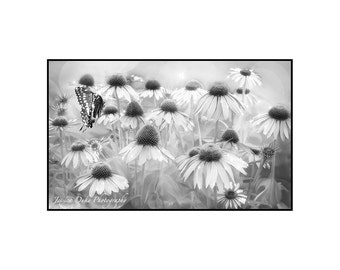 Black and White Photography, Nature Photography, Art for Girls Room, Fantasy Photography, Butterfly Wall Art, Matted Print, Ready to Frame