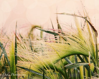 Grass Photography, Nature Photography, Dew Drops, Fine Art Photography, Sunrise Photography, Rain Drops, Bokeh, Beach Photography