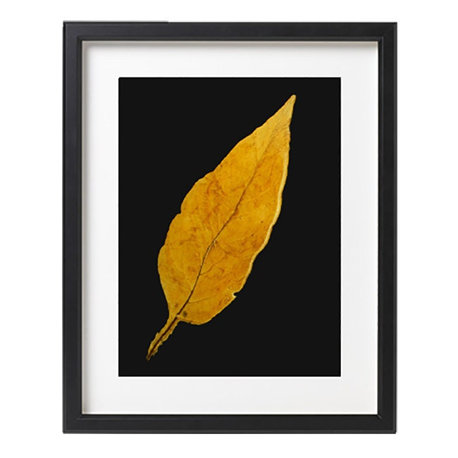 Wall art with leaves : Tobacco leaf wall art framed