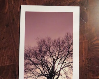 Tree Color Sky.  Photo greeting / note card. Blank inside.