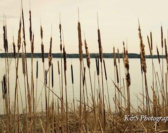 Cattails, Lake, Beach, Nature Photograph
